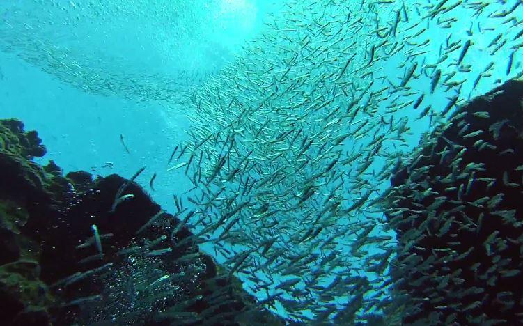 魚のトンネル2