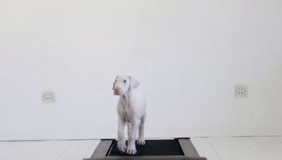 犬 トレッドミル