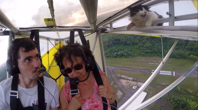 猫 グライダー1
