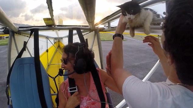 猫 グライダー2