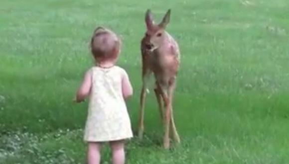 少女 鹿 ふれあい