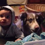 「『ママ』と言えたら一口あげる」、赤ん坊の代わりに犬が「ママ」としゃべった