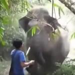【動画】巨大な野生の象が突進してきたときの対処法?