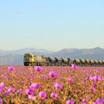 カラフルな幻想世界に変身した地球で最も乾いた土地「アタカマ砂漠」