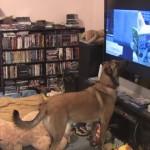 【動画】動物も2次元にはまる時代!?アニメの犬に興奮しまくるリアルの犬
