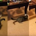 【動画】頭に張り付いた紙切れに翻弄されまくるかわいい猫