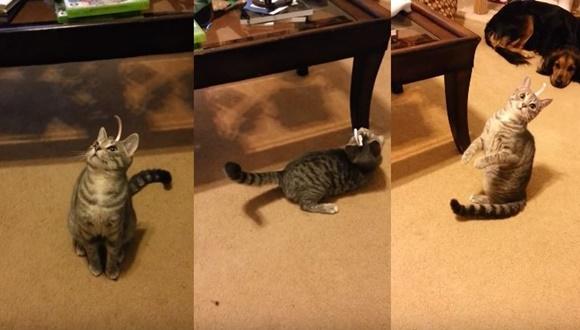 猫 頭の紙