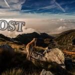 【ハウツー】森の中で迷子になった犬を見つけ出す方法