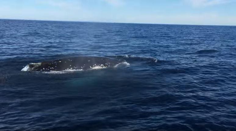クジラ 並走