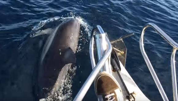 クジラ イルカ アザラシ 並走