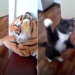 【猫パンチ】トラのぬいぐるみに右フックのラッシュを浴びせる怒り猫