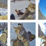 【画像】かわいい「自撮りネコ」が海外のネット上で話題に!!