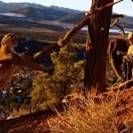 【動画】パークレンジャーが捕獲トラップにかかった野生のクーガーを救出