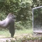 【動画】ジャングルの野生動物が初めて鏡を見た時の反応
