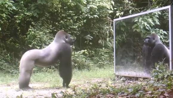野生動物 鏡