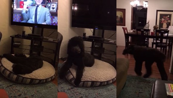 パブロフの犬 テレビ
