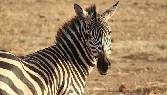 動物の鳴き声 google検索