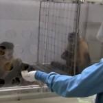 【動画】サルが給与格差を体験するとどうなる?