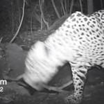 【動画】アマゾンの奥地に隠しカメラを仕掛けてみたところ…