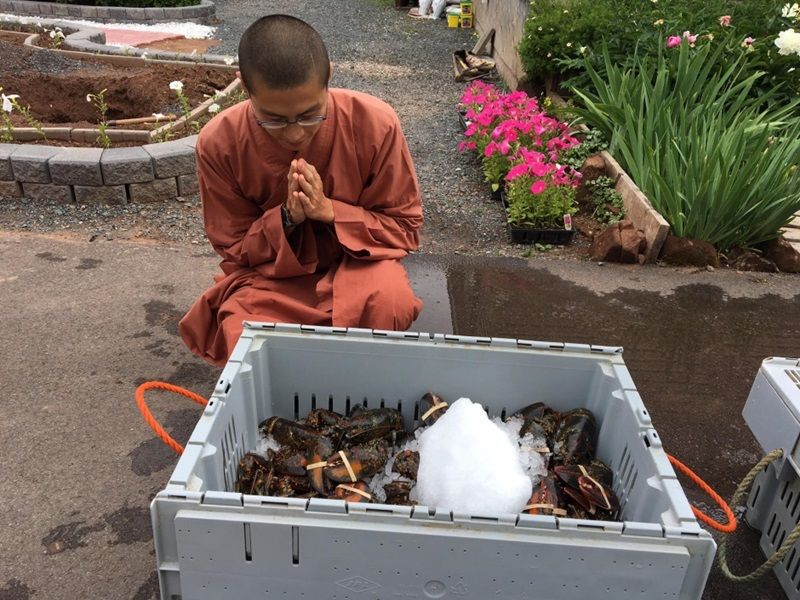 ロブスター 僧侶1