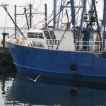 プリンスエドワードアイランドの僧侶団体、270kg相当のロブスターを購入して海に解放