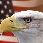 【アメリカ】退役軍人が木に引っかかった野生のワシをライフル銃で救出
