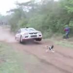 【動画】世界一ラッキーな犬、奇跡的に車との衝突を逃れる