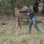 【動画】渾身の右フックでカンガルーから愛犬を救出